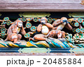 日光東照宮の見猿・聞か猿・言わ猿(栃木県の風景) 20485884