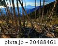 奥秩父・木賊山の倒木群と富士山 20488461