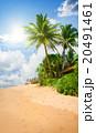 ビーチ 浜辺 ヤシの写真 20491461