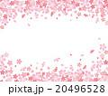 桜 桜吹雪 桜柄のイラスト 20496528