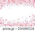 桜柄 20496528