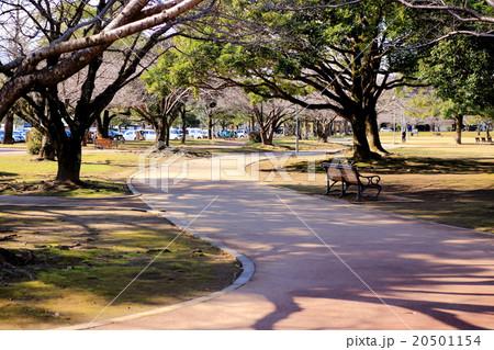 公園と遊歩道 20501154