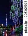 東京スカイツリーと藤の花 20502593