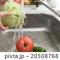 野菜 レタス 水道の写真 20508768