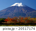 富士山 秋 風景の写真 20517174