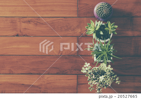Indoor plant on wooden table and white wallの写真素材 [20527665] - PIXTA
