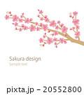 桜 枝 花のイラスト 20552800