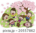 ファミリー 春 花見のイラスト 20557862