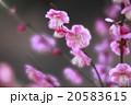 春の兆し 20583615