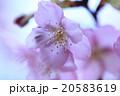 春が来た 20583619