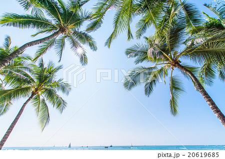 【ハワイ】オアフ島・ヤシの木と青空 20619685