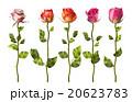 バラ 花 ベクターのイラスト 20623783