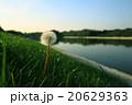 草 テクスチャー グリーンの写真 20629363