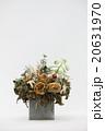 ドライフラワーと多肉植物 20631970