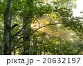森の朝 20632197