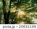 樹木 光 陽射しの写真 20632199