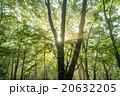 輝く朝の森 20632205