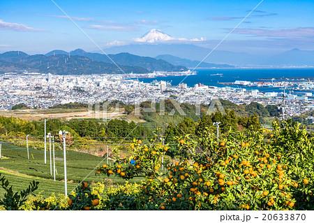 【静岡県】富士山とみかん畑と茶畑 20633870