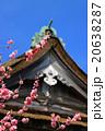 気多大社 神社 気多大神宮の写真 20638287