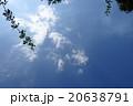 青空と白い雲と枝 20638791