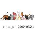 猫のグループ 20640321