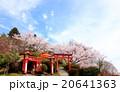 扇森稲荷神社 桜 花の写真 20641363