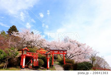 春の桜 扇森稲荷神社 20641363