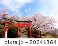 扇森稲荷神社 桜 花の写真 20641364