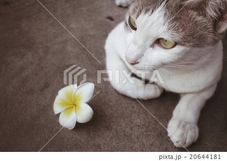 Cat with flowerの写真素材 [20644181] - PIXTA