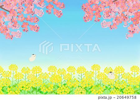 菜の花畑と桜のイラスト素材 20649758 Pixta