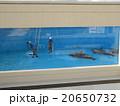 イルカの水槽を掃除 20650732