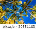 【ハワイ】ホノルル・満月とヤシの木 20651183