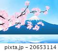 桜吹雪 20653114