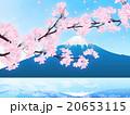 桜吹雪 20653115