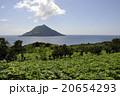 離島 八丈小島 明日葉の写真 20654293