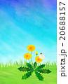 たんぽぽと蝶 20688157