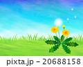 たんぽぽと綿毛 20688158