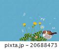 タンポポと雀 20688473