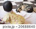 赤ちゃんと猫 20688640