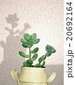 多肉植物 mini-5 20692164