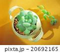 多肉植物 mini-6 20692165