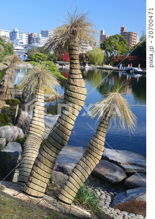 植木の冬ごもり・わら囲い(徳川園/愛知県名古屋市東区徳川町) 20700471