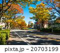 街路樹 紅葉 マンションの写真 20703199