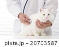 獣医と猫 20703587