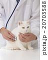 獣医と猫 20703588