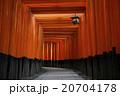 伏見稲荷大社 20704178