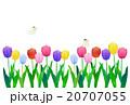 チューリップ畑 チューリップ 花のイラスト 20707055