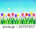 チューリップ畑 チューリップ 花のイラスト 20707057