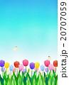 チューリップ 花 カラフルのイラスト 20707059
