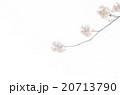 桜 20713790